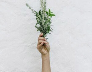 7 Cooking Herbs Every Cook Should Know
